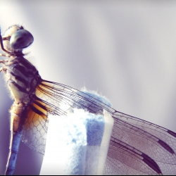 How a dragonfly's brain is designed to kill   Greg Gage