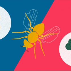 How you can make a fruit fly eat veggies   Greg Gage