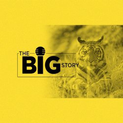 236: India's Tigers Up by 33%, But What is the Census Report Missing?