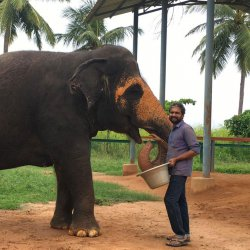 818: A Day in a Chain-Free Elephant Home in Tamil Nadu Which Is No More