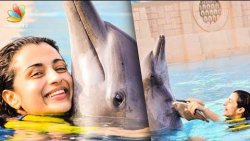 Fans Slam Trisha for Kissing a Dolphin | Hot Tamil Cinema News