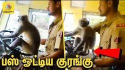 பஸ் ஓட்டும் குரங்கு - அதிர்ந்து போன பயணிகள் : Monkey Driving Bus in Karnataka | Viral Video