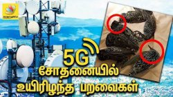5G சோதனையில் உயிரிழந்த பறவைகள் | Birds that died by 5G test in Netherlands