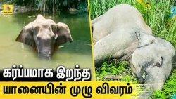 கேரளா யானை இறப்பு: கொலையா? தற்செயலா? - நடந்தது என்ன? | Kerala Pregnant Elephant lost its life