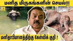 சம்மந்தப் பட்டவர்கள் கடுமையாக தண்டிக்கப்பட வேண்டும் - விஜயகாந்த் Vijayakanth on Kerala Elephant