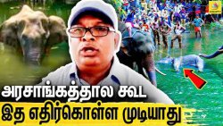 சம்பவத்தின் பின்னணி என்ன? விளக்கும் Environmentalist Ramamurthi | Kerala Elephant Death
