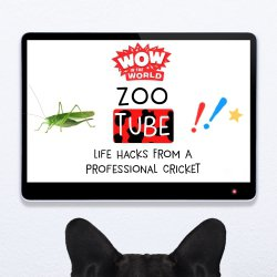 ZooTube Famous: Life Hacks From A Professional Cricket