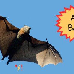Ah, BATS! (encore)