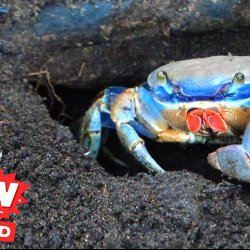 Your Crabby Pee Is Scaring Me!