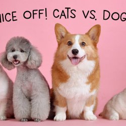 Nice-Off! Cats Vs Dogs