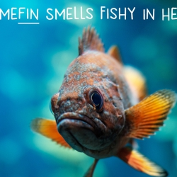 Somefin Smells Fishy In Here! (How Fish Oil Makes Us Smarter)