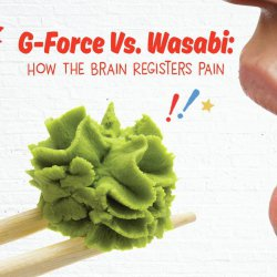 G-Force Vs. Wasabi: How The Brain Registers Pain