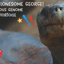 Long Live Lonesome George! - The Mysterious Genome Of A Giant Tortoise