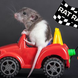 Tinkerclass (Week 2 Day 1): Rat Race!