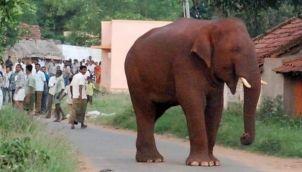 சின்னத்தம்பி ரி-என்ட்ரி | Chinnathambi Re-Entry