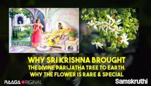 Why Sri Krishna brought the divine Parijatha tree to earth. Why the flower is rare & special