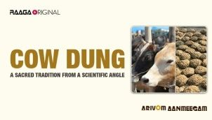 Cow dung: A sacred tradition from a scientific angle