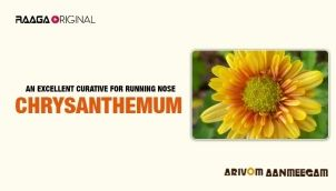 An excellent curative for running nose - Chrysanthamum