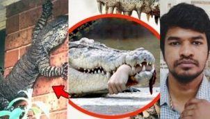 Never go near these 10 Animals