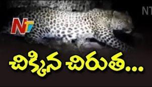చిక్కిన చిరుత! ఊపిరి పీల్చుకుంటున్న గ్రామస్థులు | Forest Officers Traps Leopard | Mummidivaram