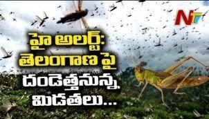 తెలంగాణ వైపు దూసుకొస్తున్న మిడతల దండు : Locusts To Attack Crops In Telangana