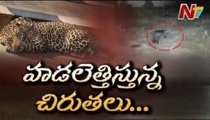 CCTV లో రికార్డు అయిన చిరుత వీడియో | Cheetah Roaming In Rajendranagar
