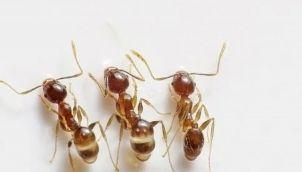 Ants - Kids stories in tamil