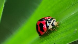Ladybird - Kids stories in tamil