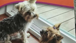 Daisy and the Super Dog Cape