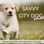 Dog & Puppy Training | Savvy City Dog